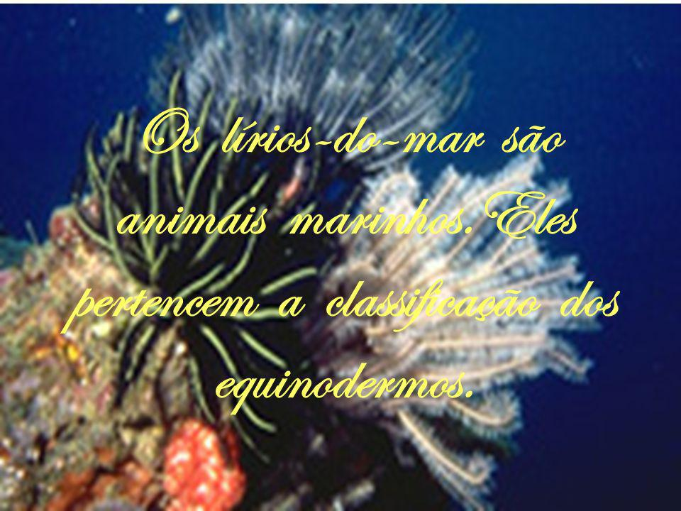 O coral-vermelho vive nos mares, por isso ele é chamado de marinho.
