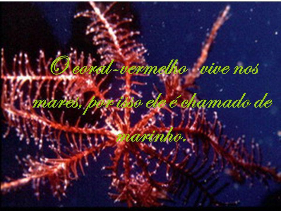 Os corais-vermelhos capturam pequenos seres vivos com seus tentáculos, eles os levam para dentro de seu corpo onde são digeridos.