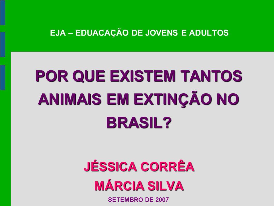 EJA – EDUACAÇÃO DE JOVENS E ADULTOS POR QUE EXISTEM TANTOS ANIMAIS EM EXTINÇÃO NO BRASIL? JÉSSICA CORRÊA MÁRCIA SILVA SETEMBRO DE 2007