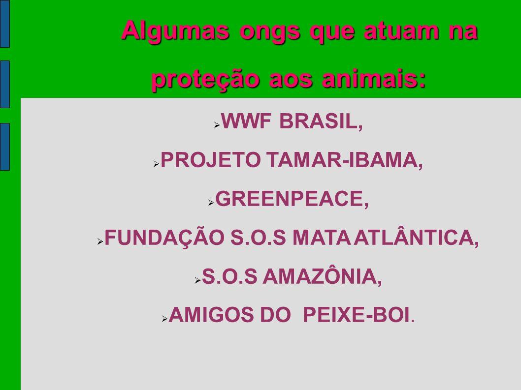 Algumas ongs que atuam na proteção aos animais: WWF BRASIL, PROJETO TAMAR-IBAMA, GREENPEACE, FUNDAÇÃO S.O.S MATA ATLÂNTICA, S.O.S AMAZÔNIA, AMIGOS DO