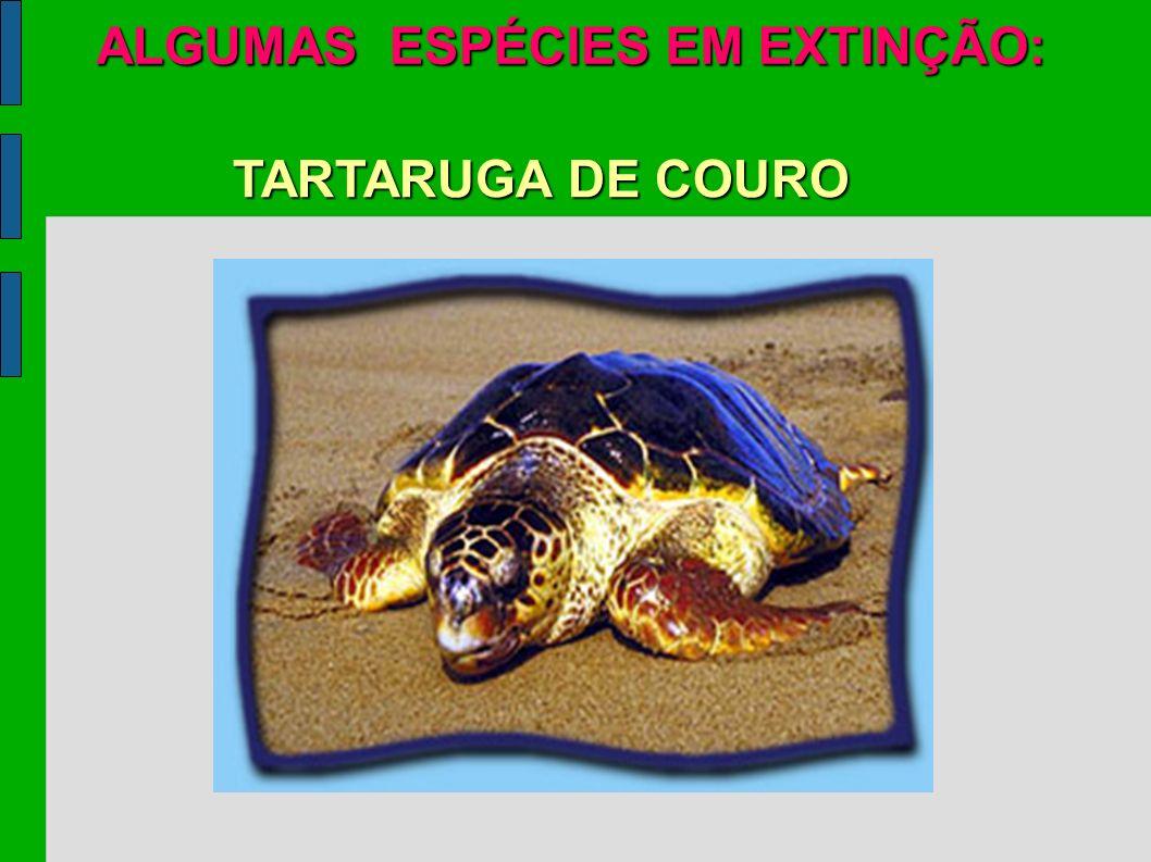 ALGUMAS ESPÉCIES EM EXTINÇÃO: TARTARUGA DE COURO