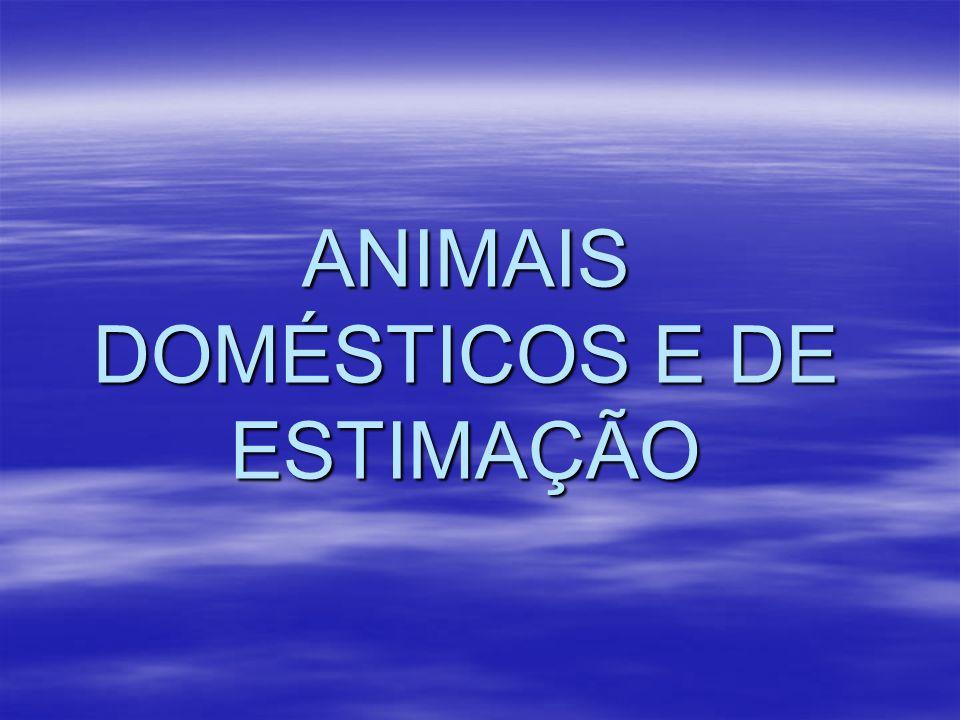 ANIMAIS DOMÉSTICOS E DE ESTIMAÇÃO