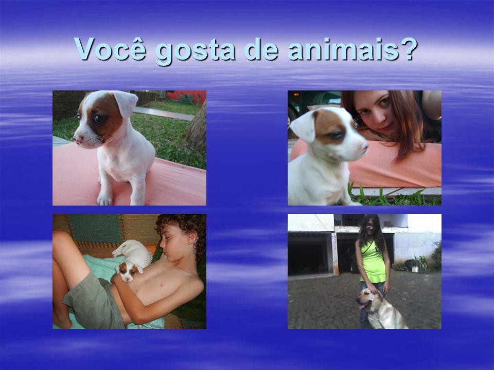 Você gosta de animais?
