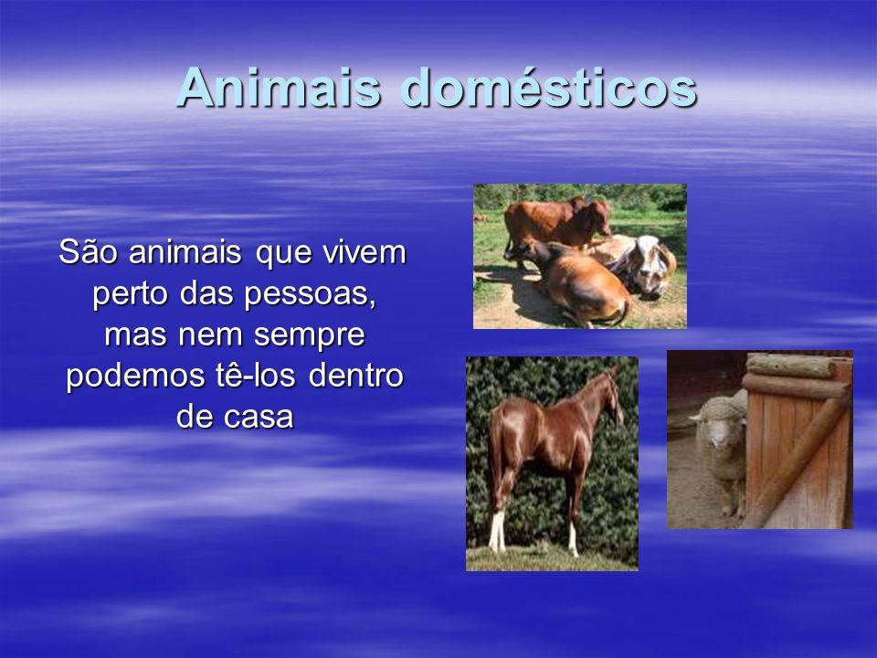 Animais domésticos São animais que vivem perto das pessoas, mas nem sempre podemos tê-los dentro de casa São animais que vivem perto das pessoas, mas