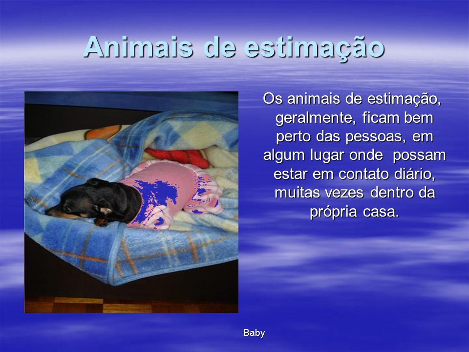 Animais de estimação Os animais de estimação, geralmente, ficam bem perto das pessoas, em algum lugar onde possam estar em contato diário, muitas veze