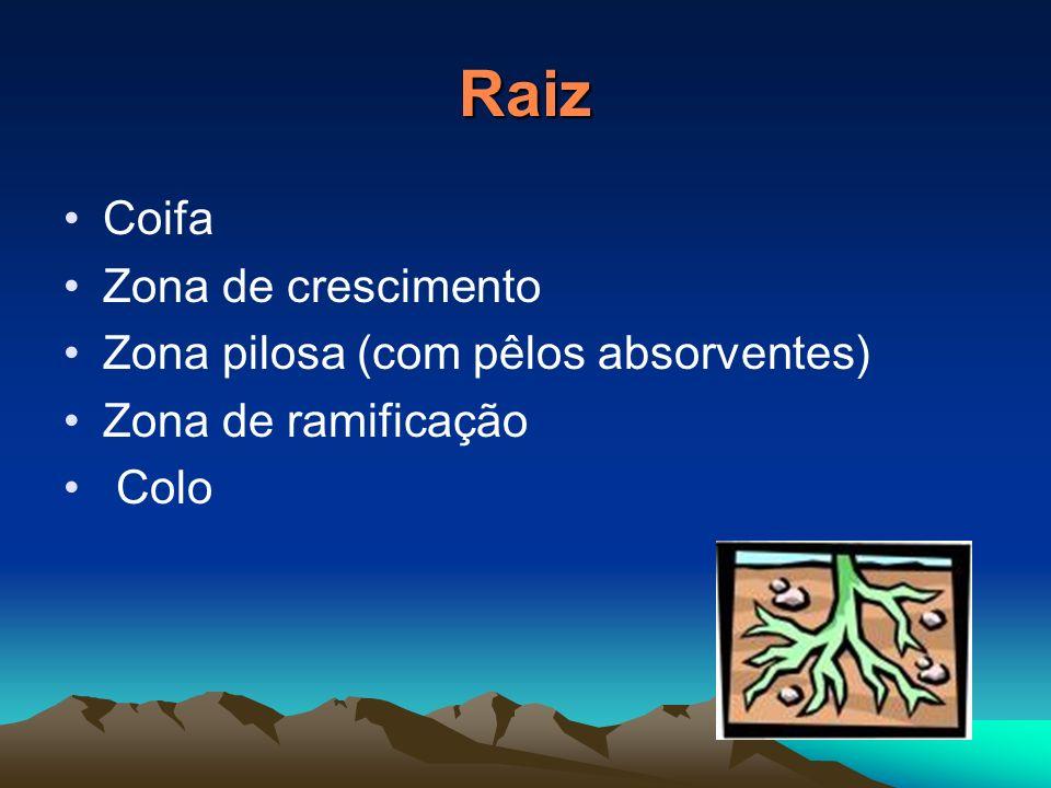 Partes das Plantas Raiz Caule Folha Flor