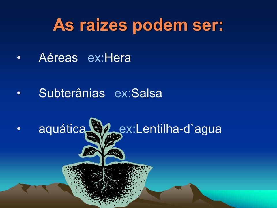 Tipo Rariz Aprumada: tem uma raiz principal mais densenvolvida de onde saem outras mais finas.ex: papoila Aprumada tuberculosa: tem uma raiz principal