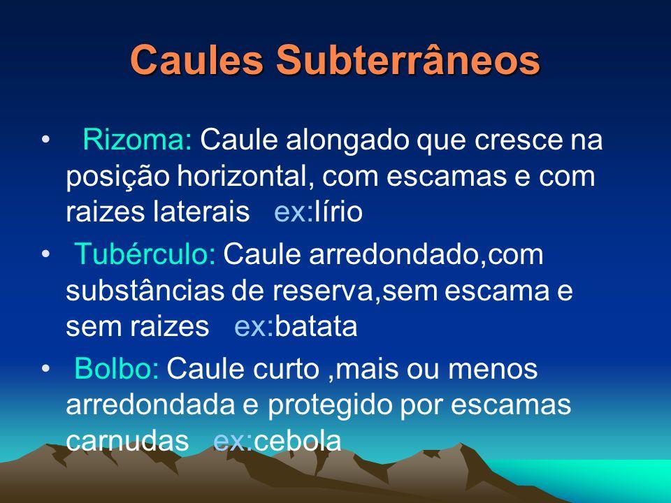 Caules Aéreos Tronco: Caule geralmente mais grosso na base do que em cima ex:oliveira Espique: Caule cilíndrico e sem ramificações só apresenta um gru