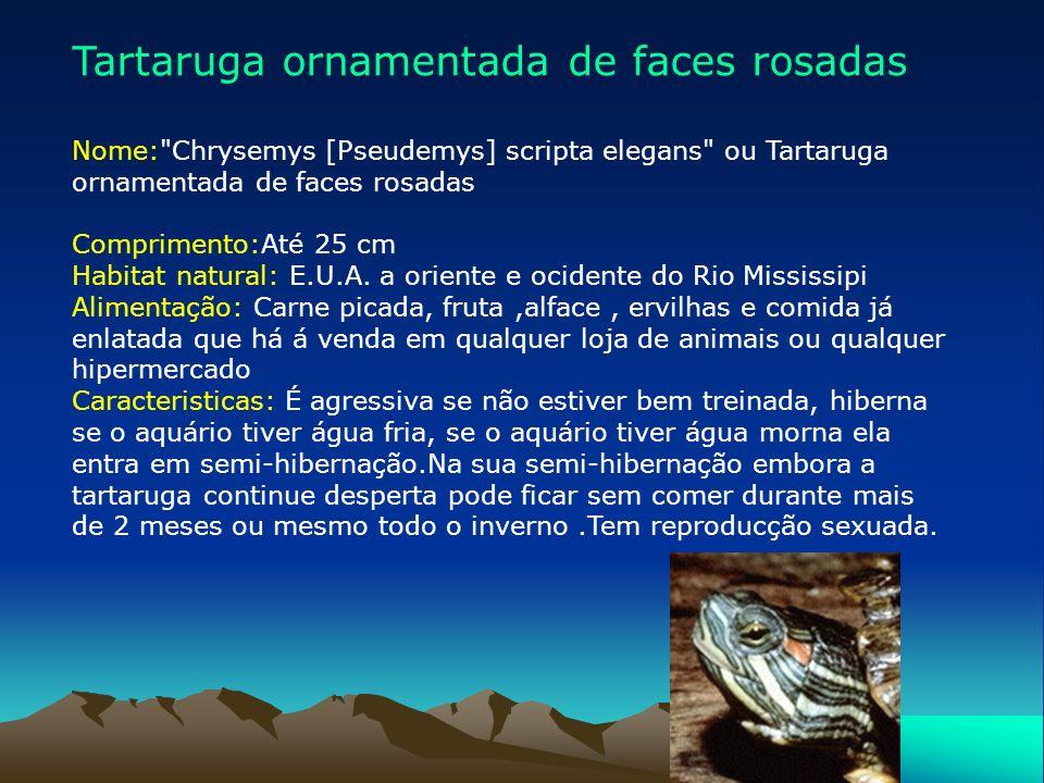 Especies de Tartarugas Vou apresentar-vos alguns tipos de tartarugas que encontrei na minha pesquisa: Tartaruga ornamentada de faces rosadas Tartaruga