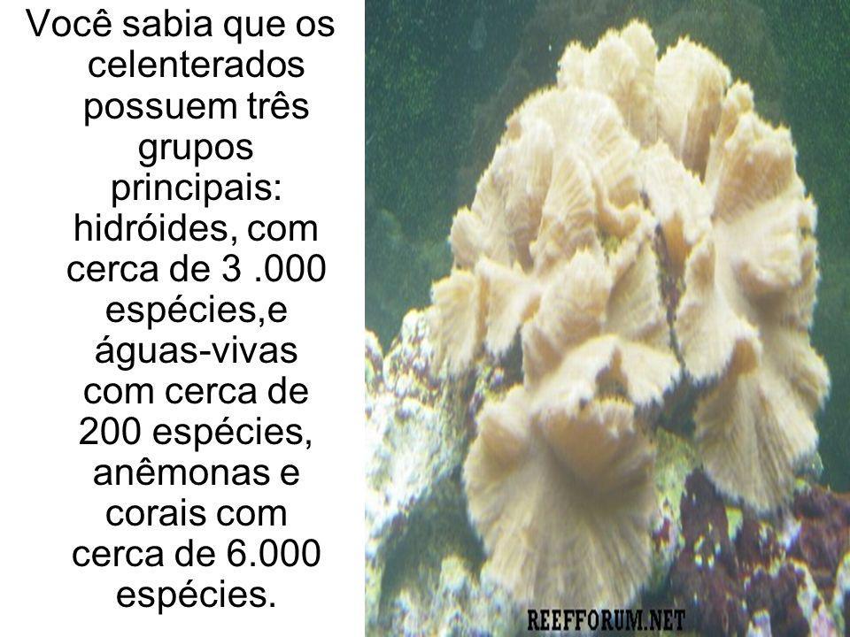 Você sabia que os celenterados possuem três grupos principais: hidróides, com cerca de 3.000 espécies,e águas-vivas com cerca de 200 espécies, anêmona