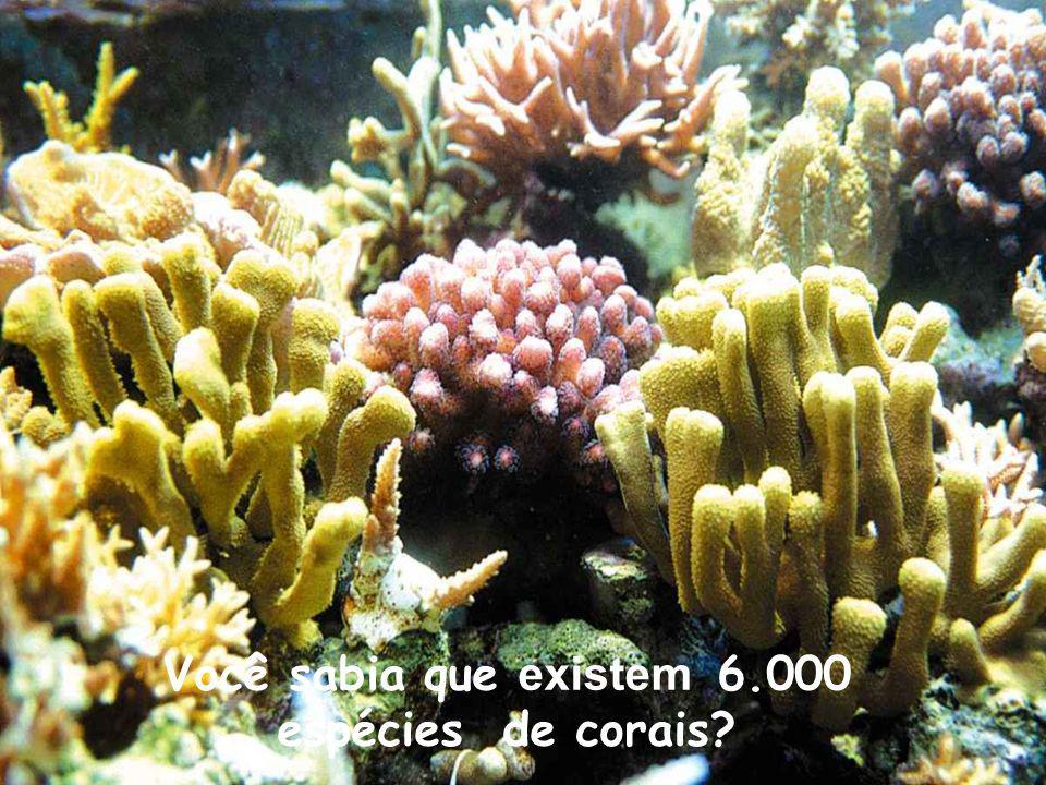 Você sabia que existem 6.000 espécies de corais?