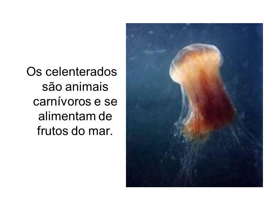 Os celenterados são animais carnívoros e se alimentam de frutos do mar.