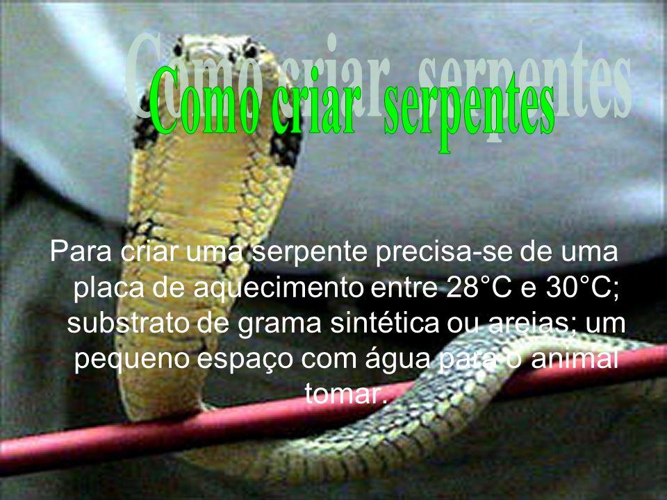 Para criar uma serpente precisa-se de uma placa de aquecimento entre 28°C e 30°C; substrato de grama sintética ou areias; um pequeno espaço com água p