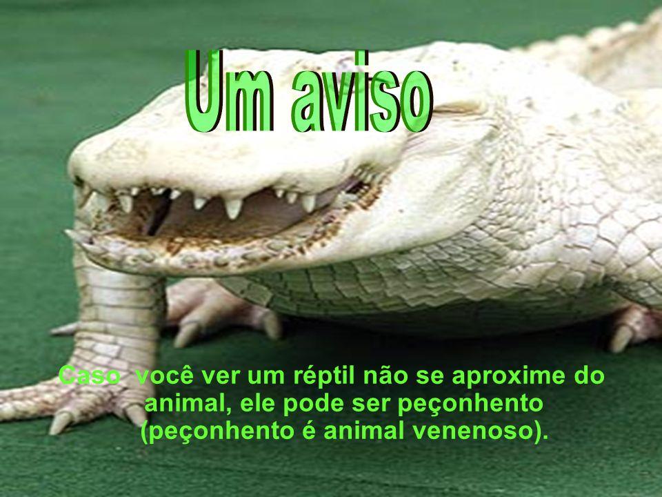Caso você ver um réptil não se aproxime do animal, ele pode ser peçonhento (peçonhento é animal venenoso).
