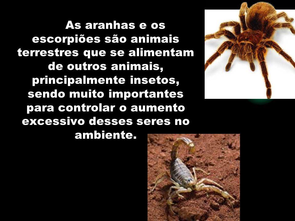 As aranhas e os escorpiões são animais terrestres que se alimentam de outros animais, principalmente insetos, sendo muito importantes para controlar o