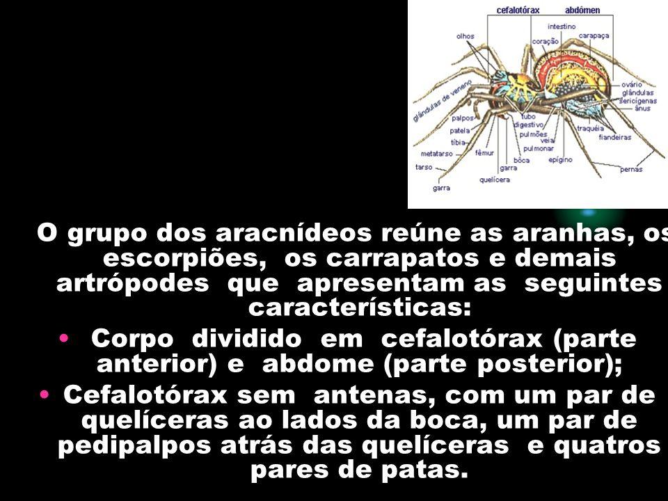 O grupo dos aracnídeos reúne as aranhas, os escorpiões, os carrapatos e demais artrópodes que apresentam as seguintes características: Corpo dividido