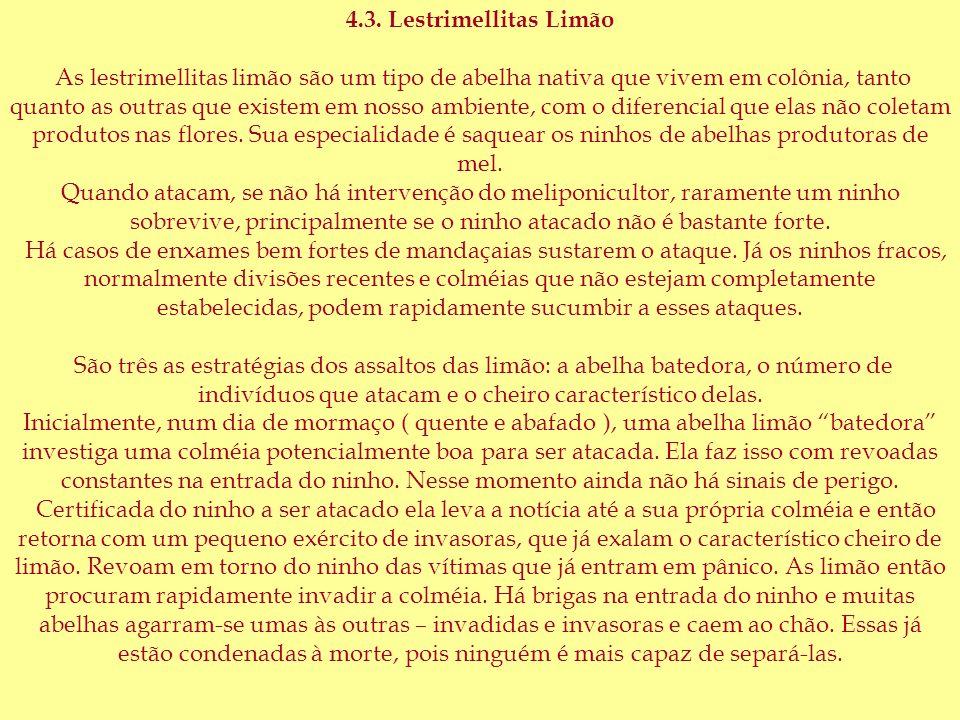 4.3. Lestrimellitas Limão As lestrimellitas limão são um tipo de abelha nativa que vivem em colônia, tanto quanto as outras que existem em nosso ambie