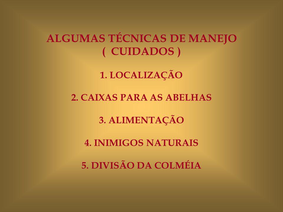 ALGUMAS TÉCNICAS DE MANEJO ( CUIDADOS ) 1. LOCALIZAÇÃO 2. CAIXAS PARA AS ABELHAS 3. ALIMENTAÇÃO 4. INIMIGOS NATURAIS 5. DIVISÃO DA COLMÉIA