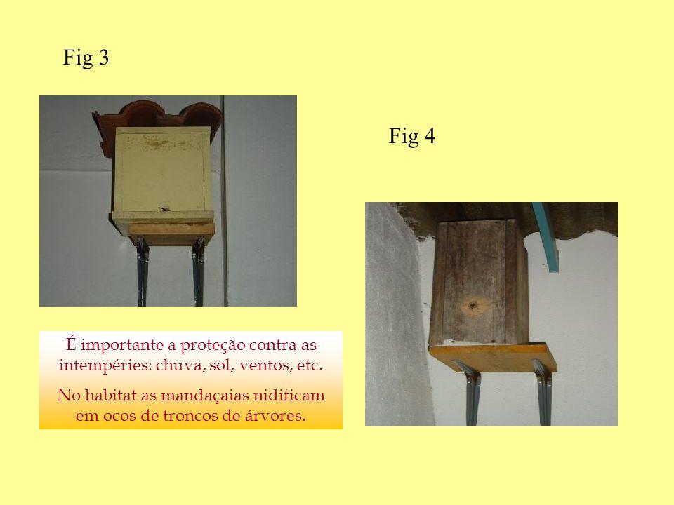 É importante a proteção contra as intempéries: chuva, sol, ventos, etc. No habitat as mandaçaias nidificam em ocos de troncos de árvores. Fig 3 Fig 4