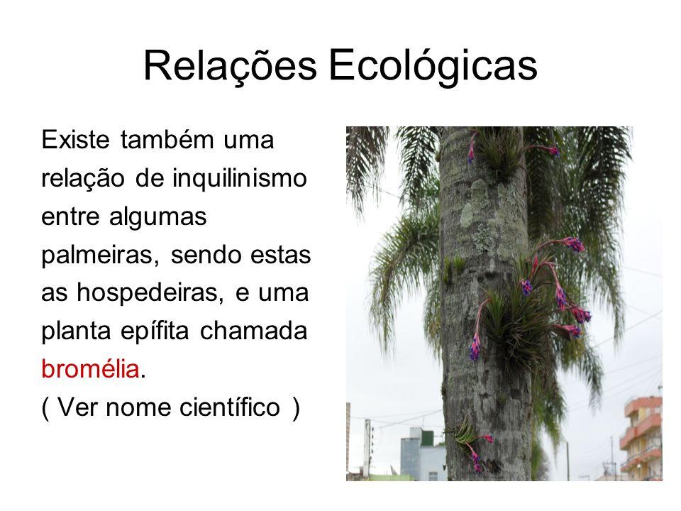 Relações Ecológicas Existe também uma relação de inquilinismo entre algumas palmeiras, sendo estas as hospedeiras, e uma planta epífita chamada bromél