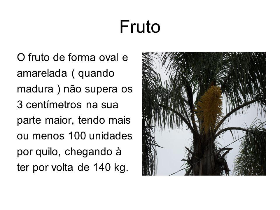 Fruto O fruto de forma oval e amarelada ( quando madura ) não supera os 3 centímetros na sua parte maior, tendo mais ou menos 100 unidades por quilo,