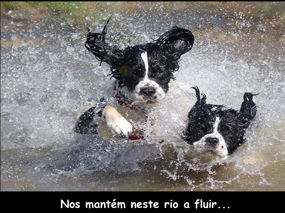 Nos mantém neste rio a fluir...