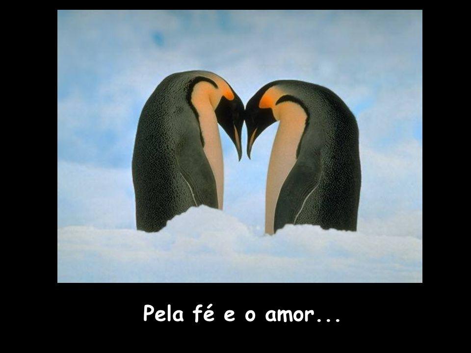 Pela fé e o amor...