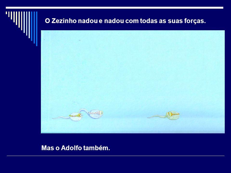 O Zezinho nadou e nadou com todas as suas forças. Mas o Adolfo também.