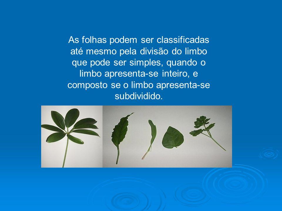 Para exercer algumas funções especiais, as folhas podem sofrer algumas modificações.