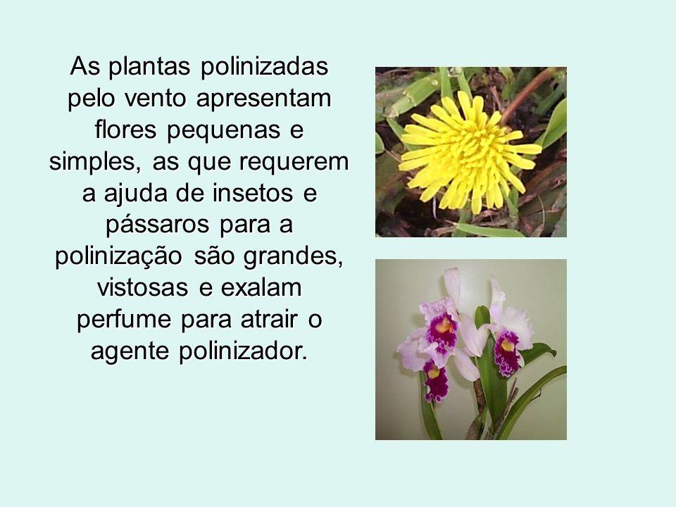 As plantas polinizadas pelo vento apresentam flores pequenas e simples, as que requerem a ajuda de insetos e pássaros para a polinização são grandes,