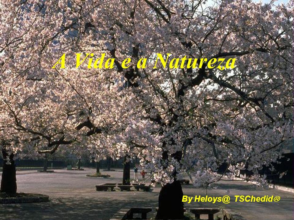 By Heloys@ TSChedid A Vida e a Natureza