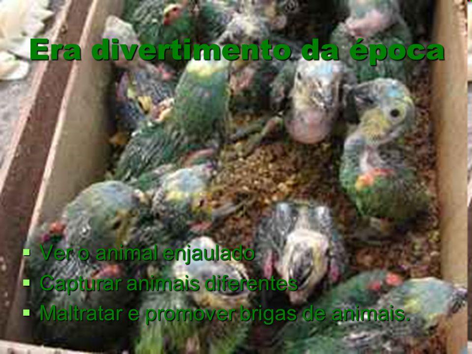 Era divertimento da época Ver o animal enjaulado Ver o animal enjaulado Capturar animais diferentes Capturar animais diferentes Maltratar e promover b