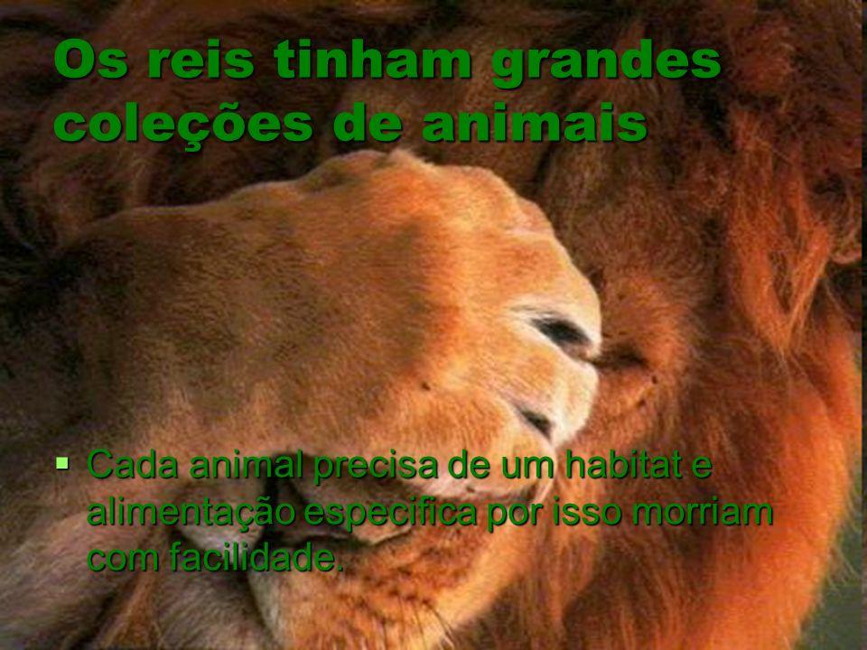 Os reis tinham grandes coleções de animais Cada animal precisa de um habitat e alimentação especifica por isso morriam com facilidade. Cada animal pre