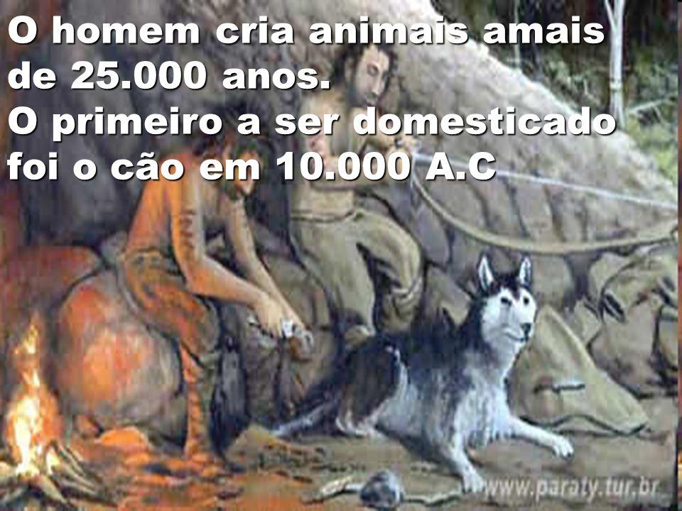 O homem cria animais amais de 25.000 anos. O primeiro a ser domesticado foi o cão em 10.000 A.C