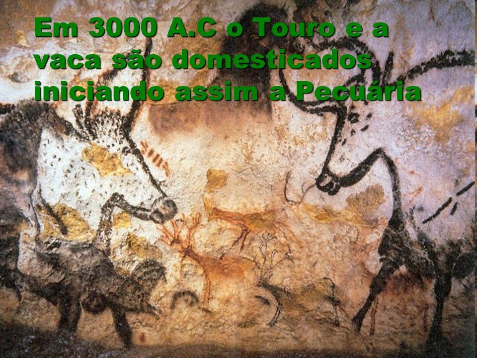 Em 3000 A.C o Touro e a vaca são domesticados iniciando assim a Pecuária