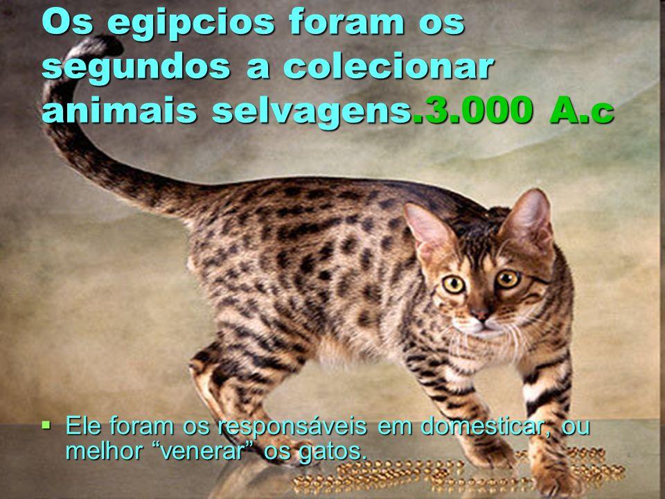 Os egipcios foram os segundos a colecionar animais selvagens.3.000 A.c Ele foram os responsáveis em domesticar, ou melhor venerar os gatos. Ele foram