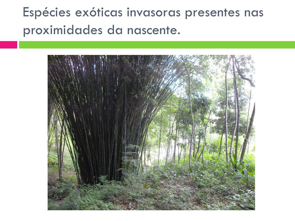 Outras espécies exóticas invasoras