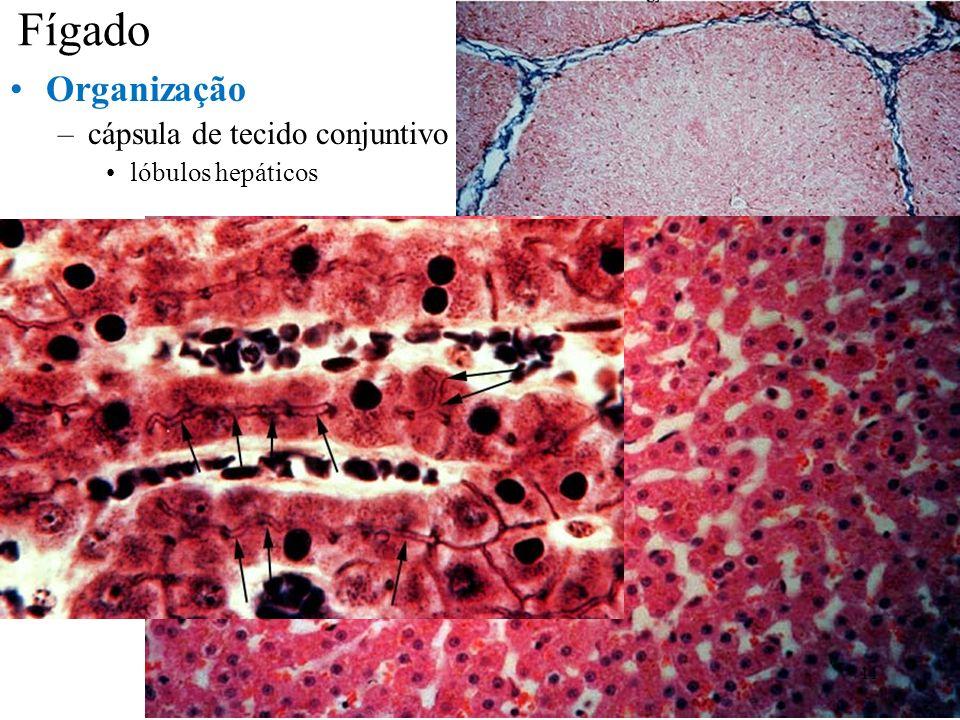 Fígado Organização –cápsula de tecido conjuntivo lóbulos hepáticos 11
