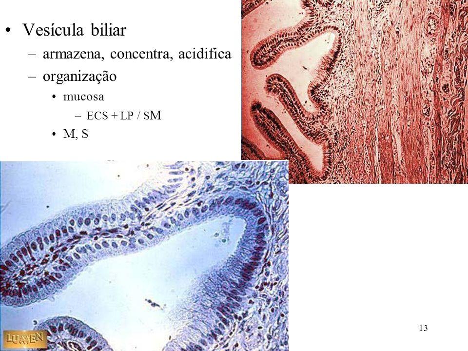 Vesícula biliar –armazena, concentra, acidifica –organização mucosa –ECS + LP / S M M, S 13