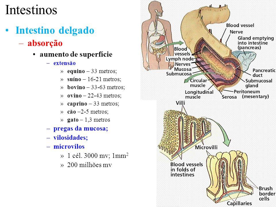 Intestinos Intestino delgado –absorção aumento de superfície –extensão »equino – 33 metros; »suíno – 16-21 metros; »bovino – 33-63 metros; »ovino – 22