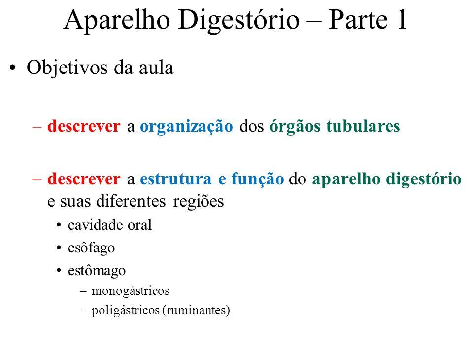 Aparelho Digestório – Parte 1 Objetivos da aula –descrever a organização dos órgãos tubulares –descrever a estrutura e função do aparelho digestório e