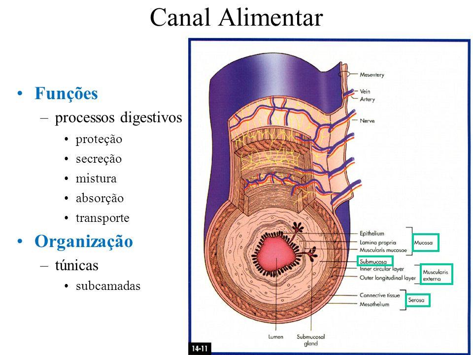 Canal Alimentar Funções –processos digestivos proteção secreção mistura absorção transporte Organização –túnicas subcamadas