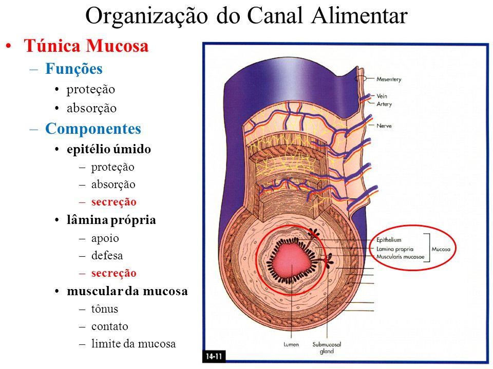 Organização do Canal Alimentar Túnica Mucosa –Funções proteção absorção –Componentes epitélio úmido –proteção –absorção –secreção lâmina própria –apoi