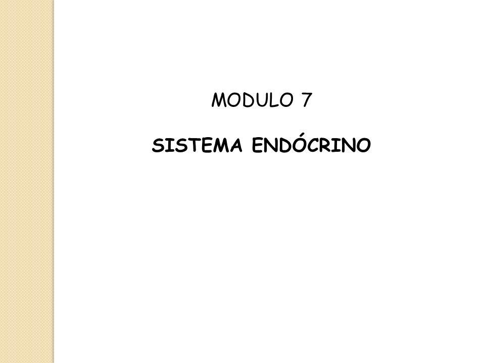 MODULO 7 SISTEMA ENDÓCRINO