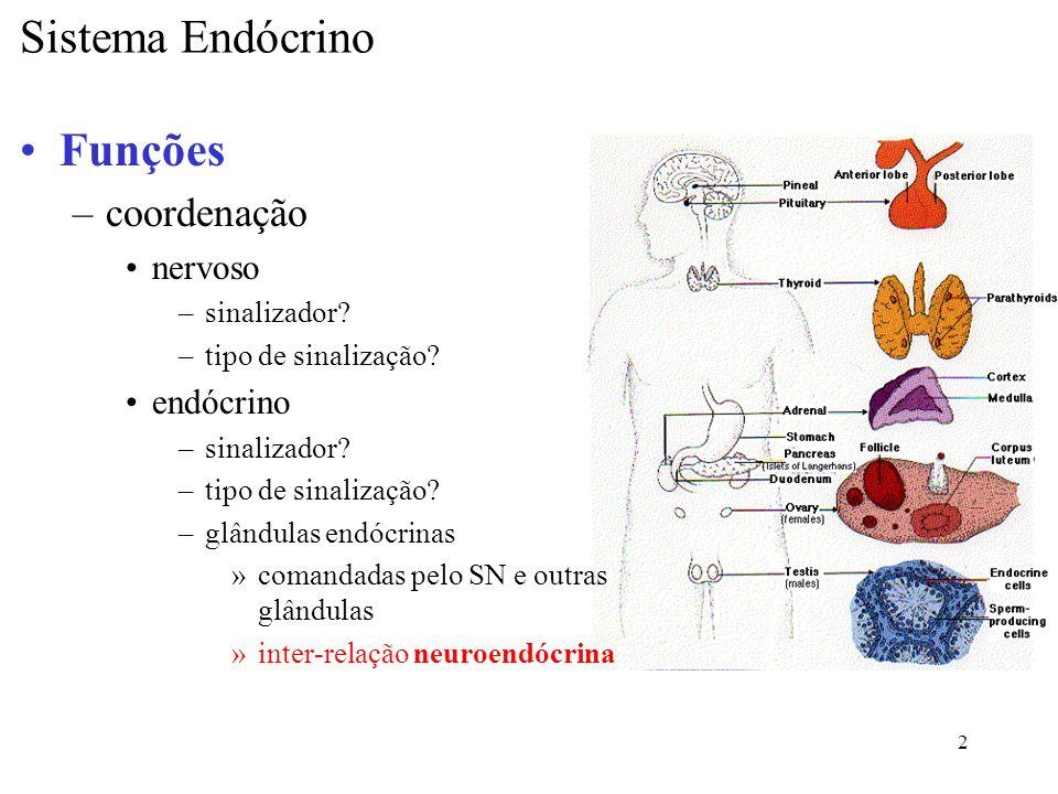 3 Características –glândulas endócrinas células isoladas aglomerados –folículos –cordões »células hormônios