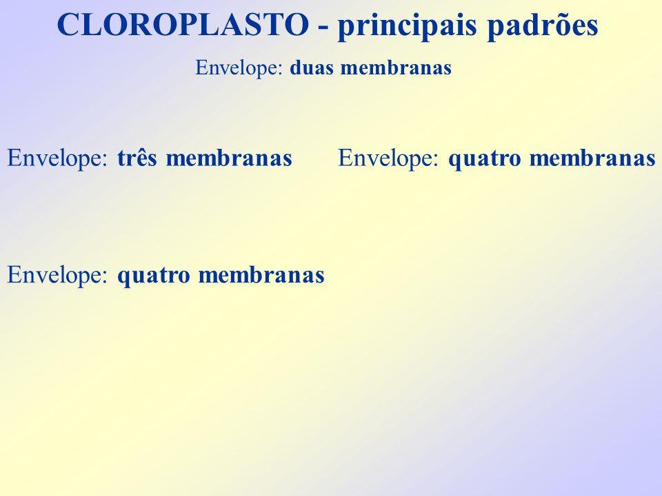 CLOROPLASTO - principais padrões Envelope: duas membranas Envelope: quatro membranas Envelope: três membranasEnvelope: quatro membranas