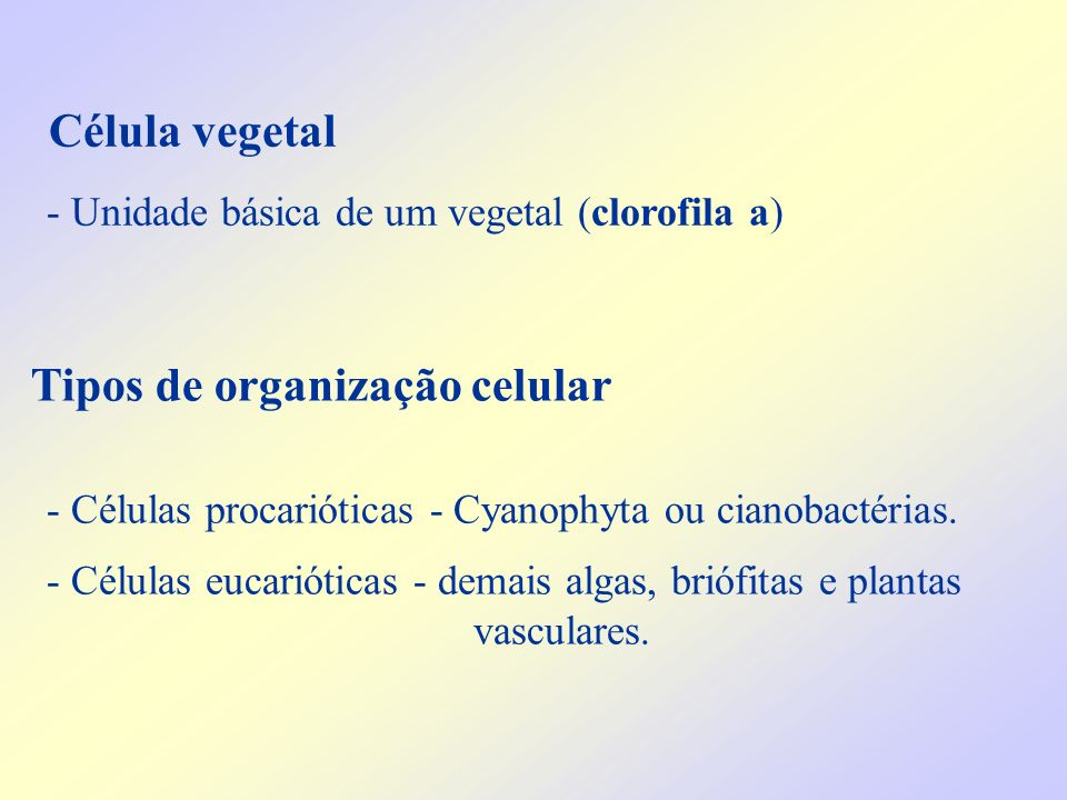 - Unidade básica de um vegetal (clorofila a) Tipos de organização celular - Células procarióticas - Cyanophyta ou cianobactérias. - Células eucariótic