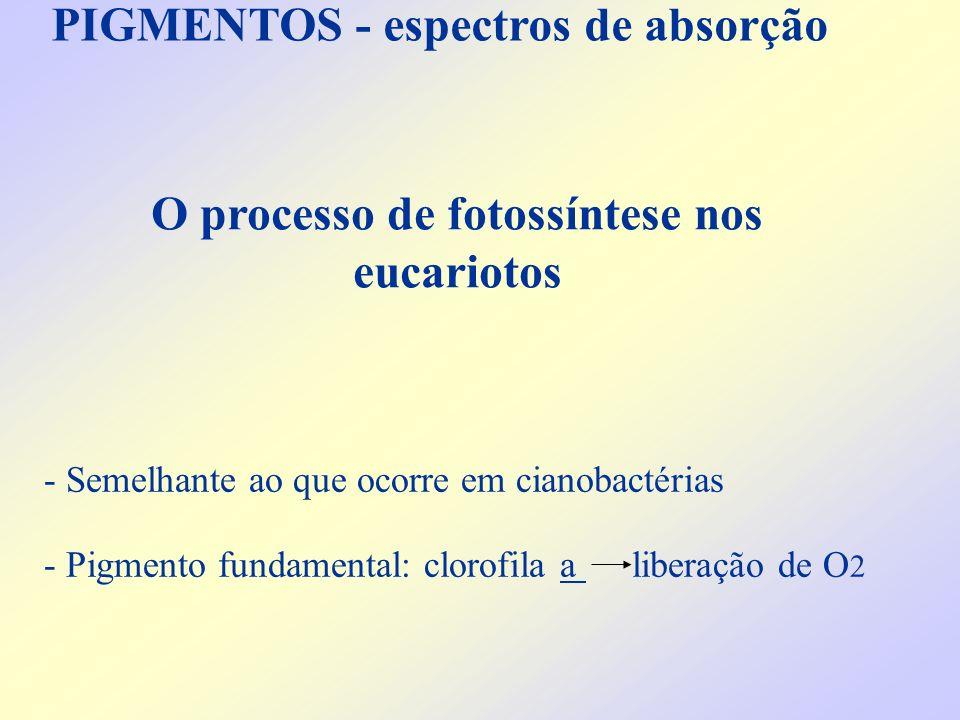 PIGMENTOS - espectros de absorção - Semelhante ao que ocorre em cianobactérias - Pigmento fundamental: clorofila a liberação de O 2 O processo de foto