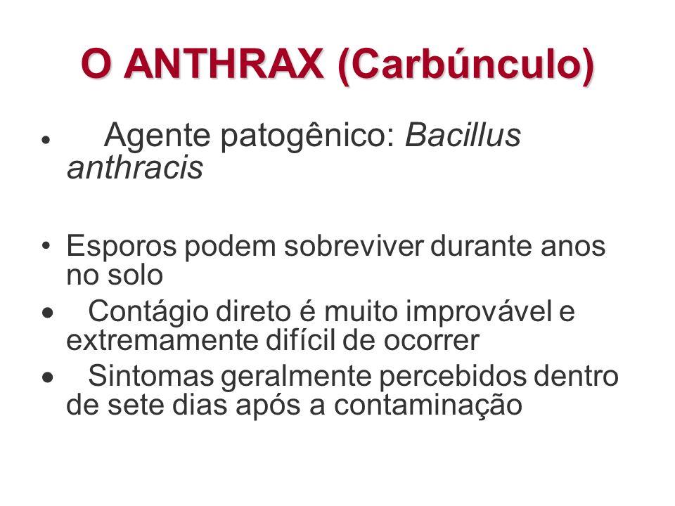 O ANTHRAX (Carbúnculo) Agente patogênico: Bacillus anthracis Esporos podem sobreviver durante anos no solo Contágio direto é muito improvável e extrem
