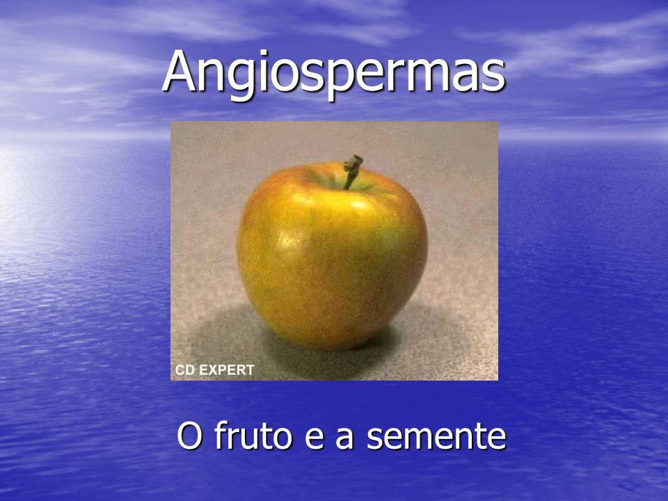 Angiospermas O fruto e a semente